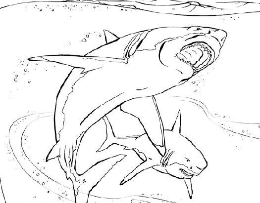 Mẫu tranh tô màu hình 2 con cá mập dành cho béMẫu tranh tô màu hình 2 con cá mập dành cho bé