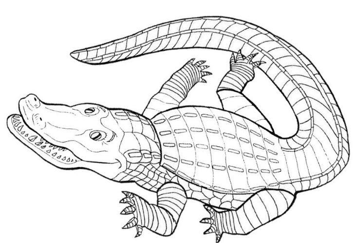 Mẫu tranh hình cá xấu hung tợn dành cho bé