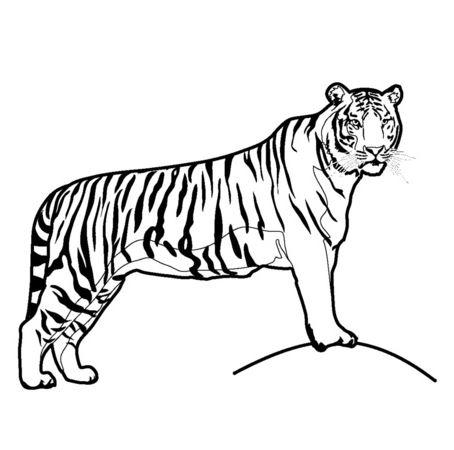 Mẫu tranh tô màu con hổ hung tợn dành cho bé tập tô