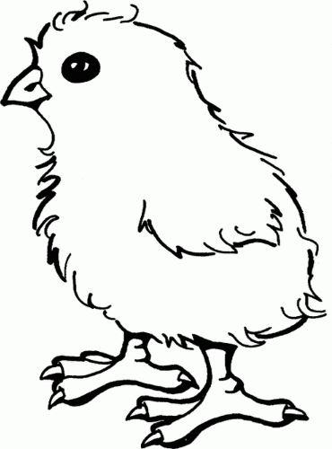 Mẫu tranh tô màu hình chú gà con dành cho bé