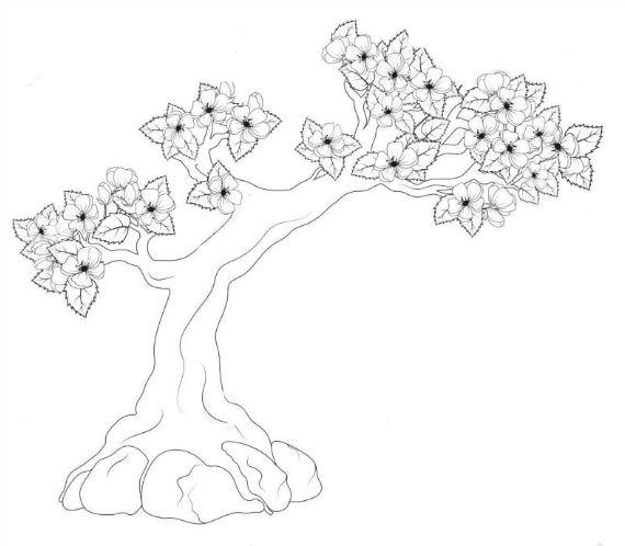 Mẫu tranh tô màu hình cây mai dành cho bé mầm non tập tô