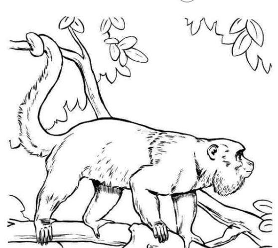 Mẫu tranh tô màu hình con khỉ dành cho bé tập tô