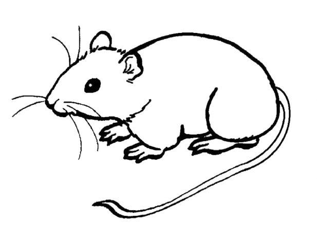 Mẫu tranh tô màu hình con chuột cho bé tập tô