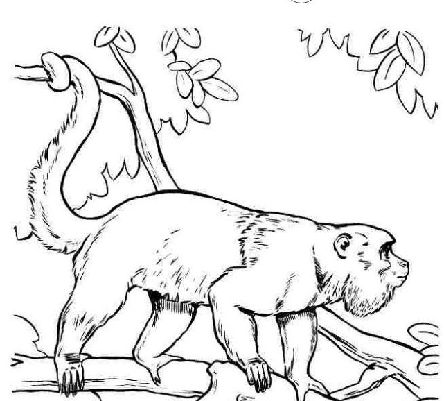 Mẫu tranh tô màu cho bé hình chú khỉ đầu đàn mạnh mẽ