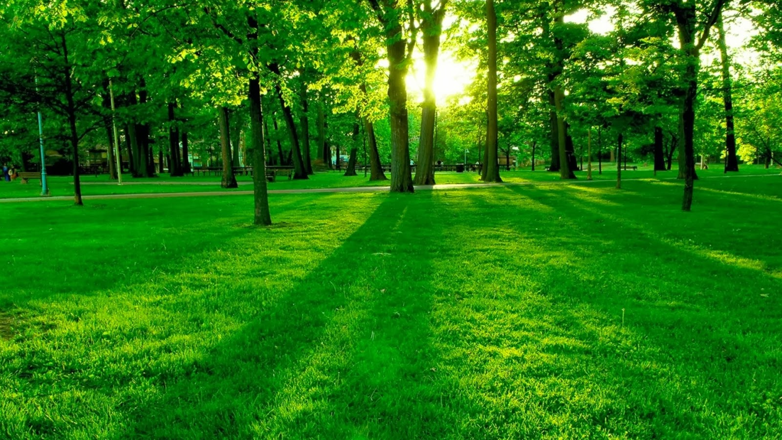 Một bức tranh thiên nhiên với quan cảnh toàn màu xanh thật đẹp