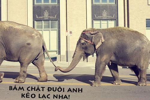 Ảnh chế hài hước của 2 chú voi