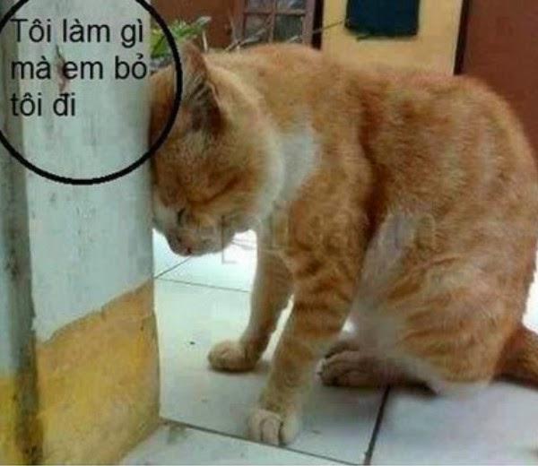 Ảnh chế nỗi thất vọng của chú Mèo