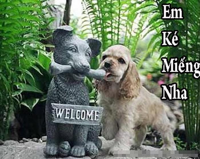 Ảnh chế động vật hài hước của chú cún